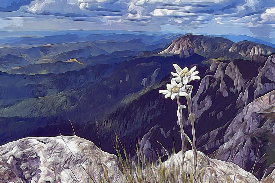 0-edelweiss-0286